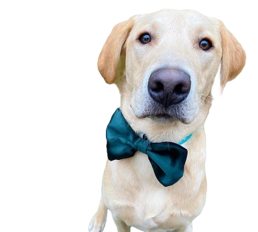 Dark green satin bow tie