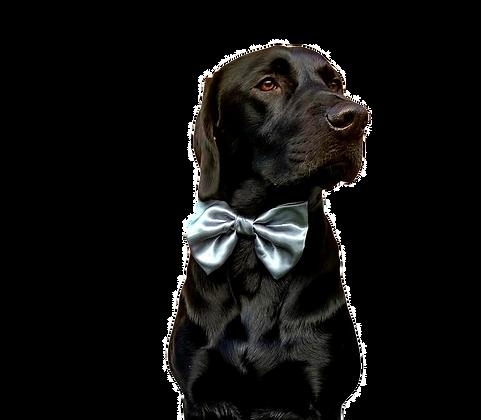 Gunmetal grey satin bow tie