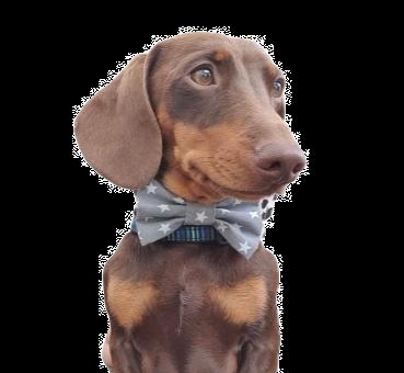 Light grey star bow tie