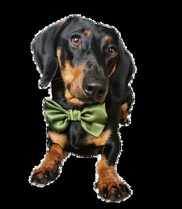 Olive satin bow tie