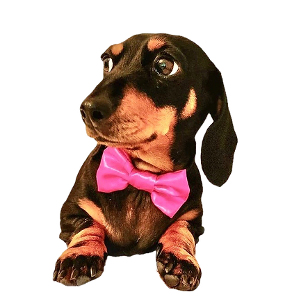 Cerise satin bow tie