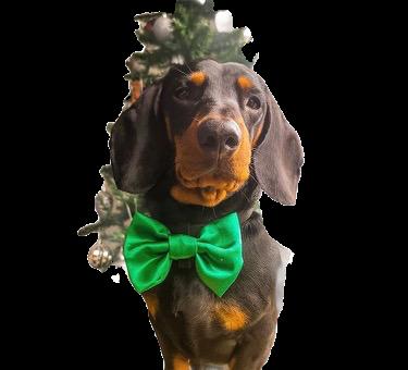Green satin bow tie