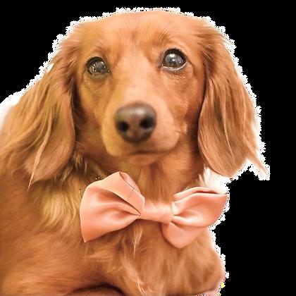 Peach satin bow tie