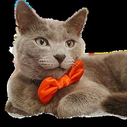 Crimson satin bow tie