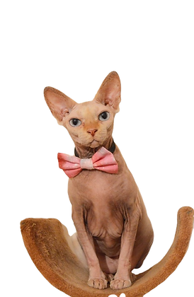 Pink sky at night bow tie