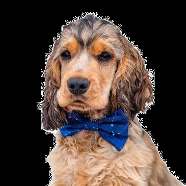Constellation bow tie
