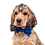 Thumbnail: Constellation bow tie