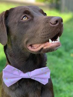 Pink flower Bow tie