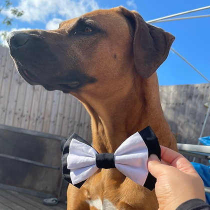 The TUX bow tie
