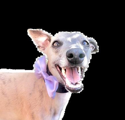 Lilac satin bow tie