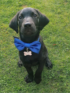 Electric blue satin bow tie