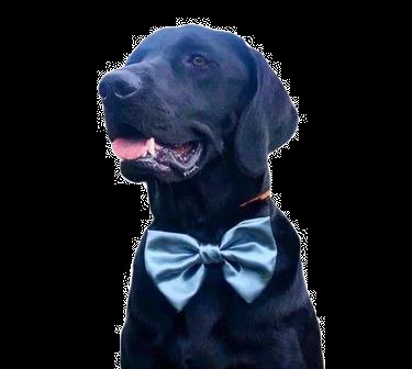 Ocean satin bow tie