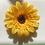 Thumbnail: Yellow Flower elastic loop attachment