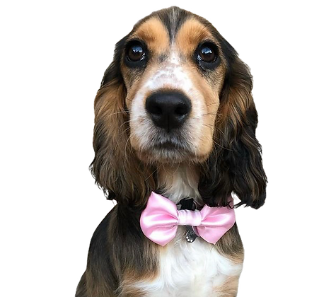 Baby Pink satin bow tie
