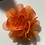 Thumbnail: Mini orange Flower elastic loop attachment