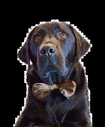 Chocolate satin bow tie