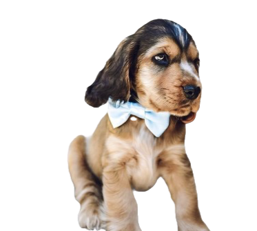 Baby blue satin bow tie
