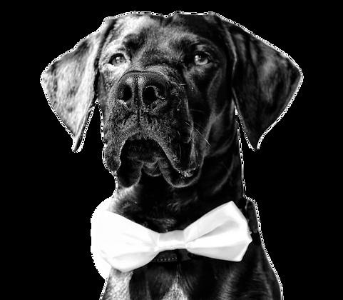 White satin bow tie