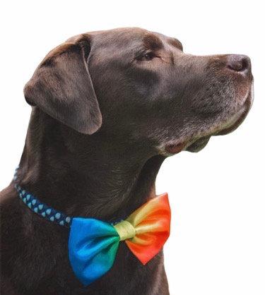 Rainbow satin bow tie