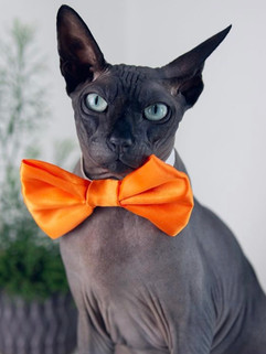 Orange Satin Bow Tie