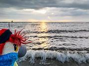 Blu & das Ijsselmeer bei Urk