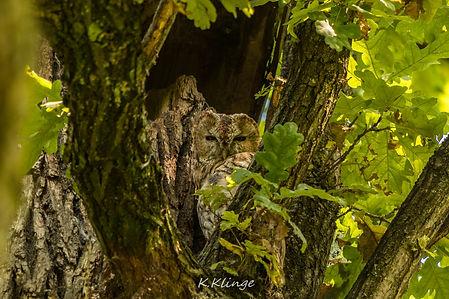 Der Waldkauz & ich