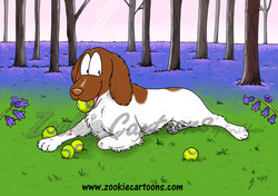 Clarence the Springer Spaniel