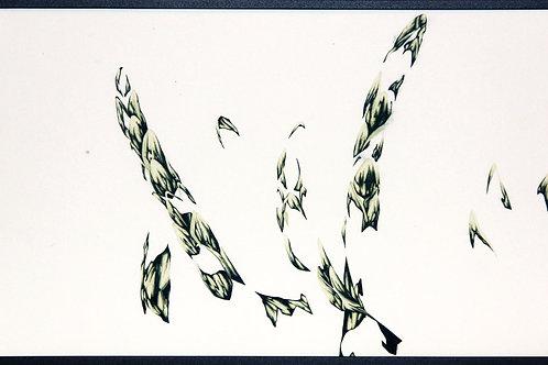 Juniperus_Leaf