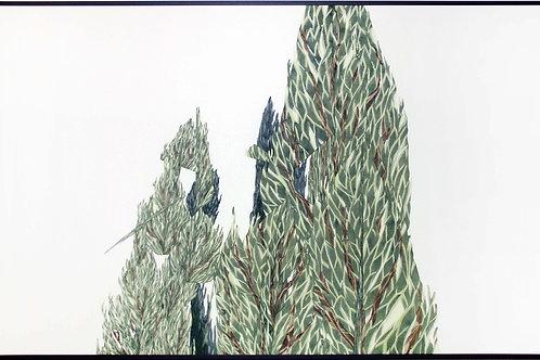 Juniperus1.3