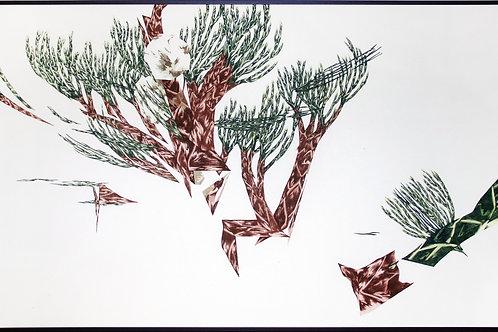 Juniperus1.0