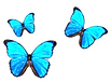 Butterfly3_edited.png
