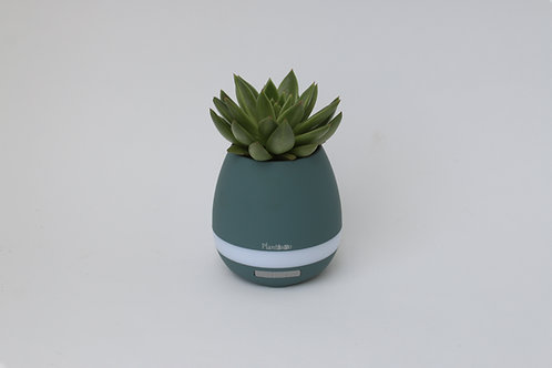 Plantiano Matt turquoise