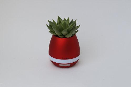 Plantiano Matt red