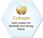 Hyaluflex | Collagen