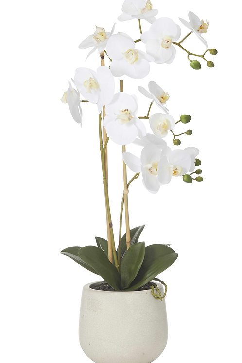Artificial Butterfly Orchid in Sandstone Pot