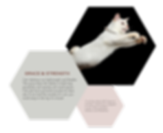Cats-06.png