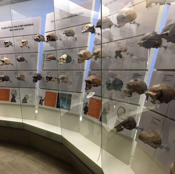 EVOLUTION EXHIBITION RESEARCH