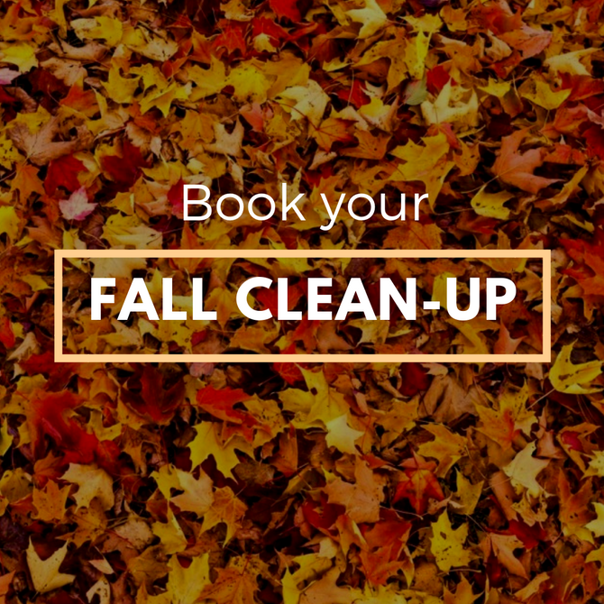 Fall Cleanup!