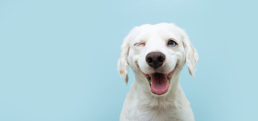 Happy dog puppy winking an eye and smili