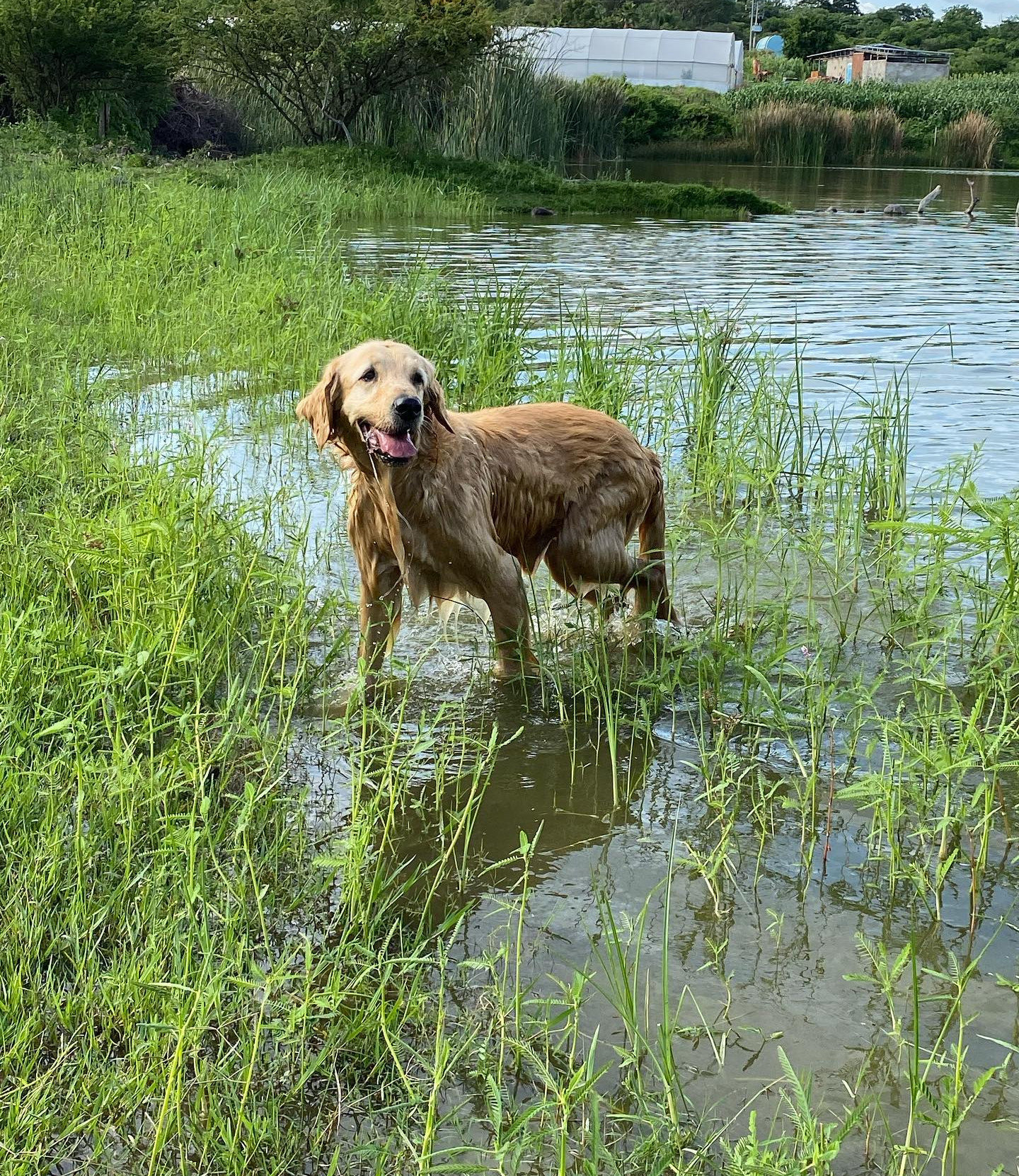 Charlie in the pond