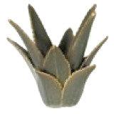 Aloe Vera Candleholder