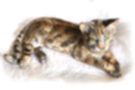 Large_Tabby_Cat.jpg