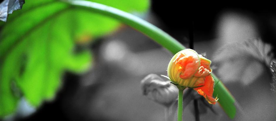 La flor de calabaza en la cocina mexicana