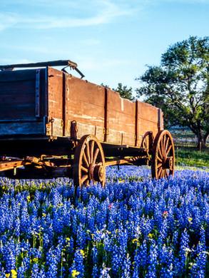 texas-hill-country-bluebonnets.jpg