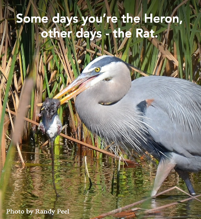 Are you the Heron or the Rat