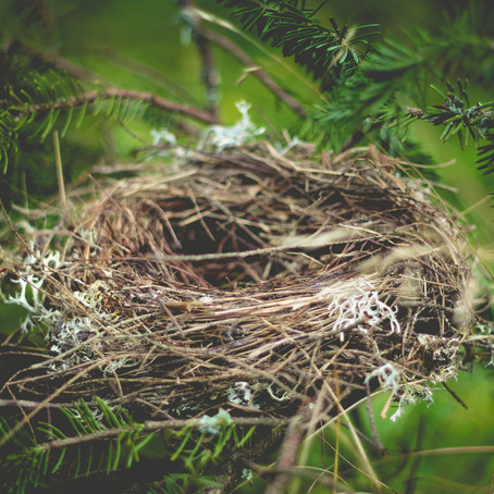 Surviving the Empty Nest Transition