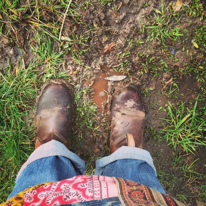 Cockatoos, mud and grubs