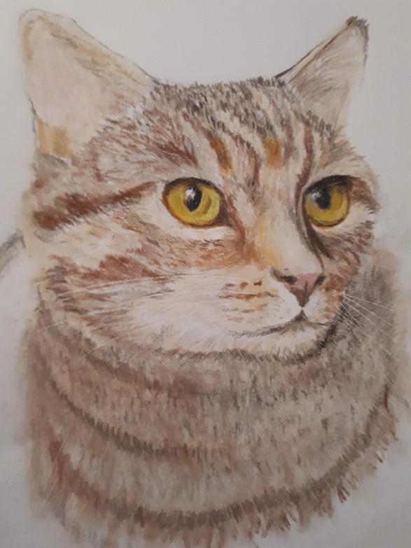 Pencil Crayon Cat Portrait