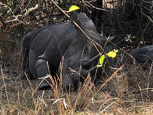 Rhino tracking in Ziwa Rhino sanctuary.j