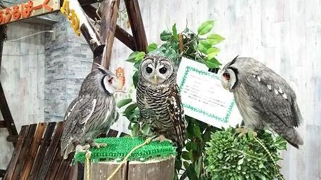 owlpark.jpg
